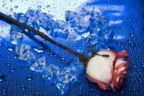 coeur de glace.jpg